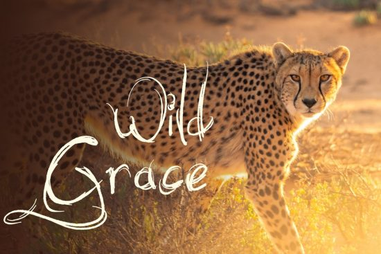 Wild Grace, 5Rhythms Dance and Yoga Retreat with Sacha Paddy and Neal Ghoshal at Mana Retreat